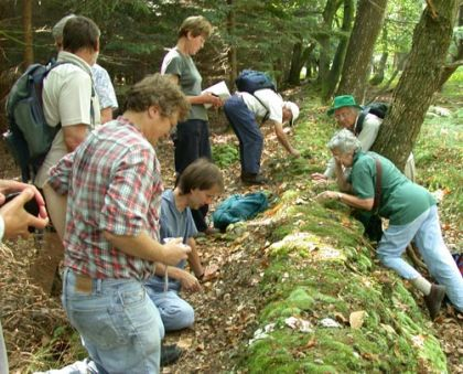 A fungus recording group in action