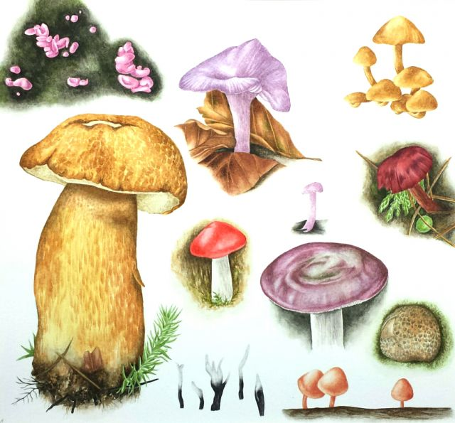 Title: Fungi of Mark Ash Wood by Sarah Morrish  Montage style paintings provide an ideal opportunity to illustrate a variety of fungi species from one habitat type or several